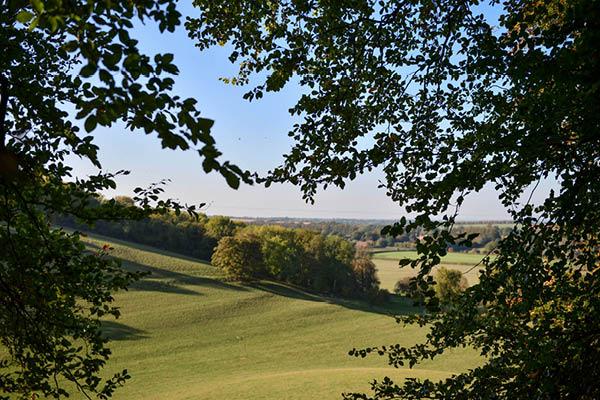 Coates & Seely Hampshire Vineyard