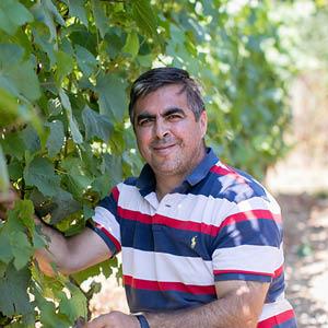 Paulo Veloso, Vineyard Manager, C&S