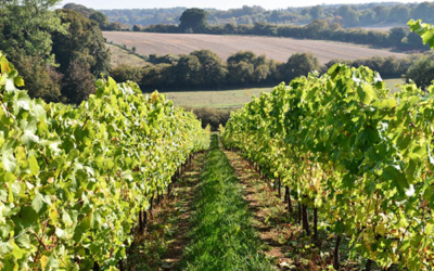 Coates and Seely English Wine vineyard