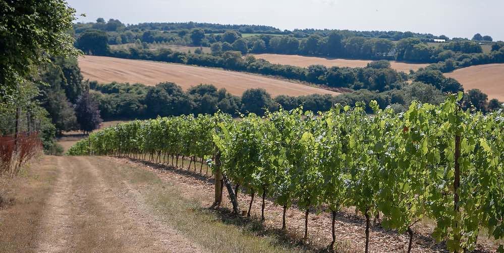 Hampshire Sparkling Wine
