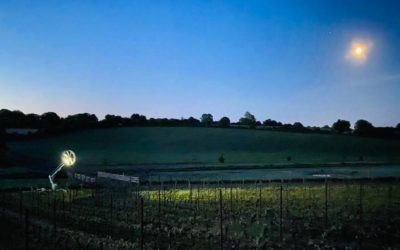English Sparkling Wine vineyard
