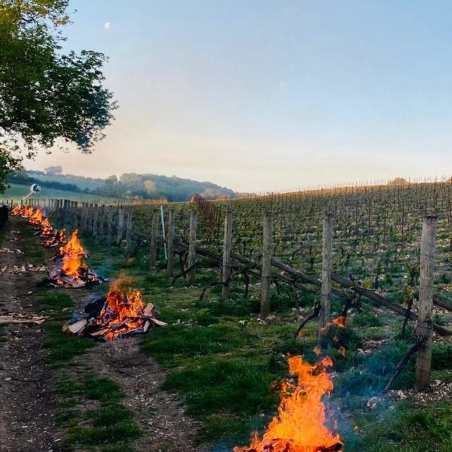 Vineyard fires to protect against vineyard frost at Coates & Seely.