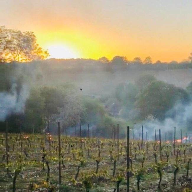 Sunrise over the vineyard.