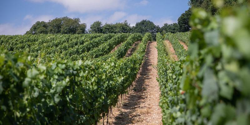 Coates & Seely Hampshire vineyard tour