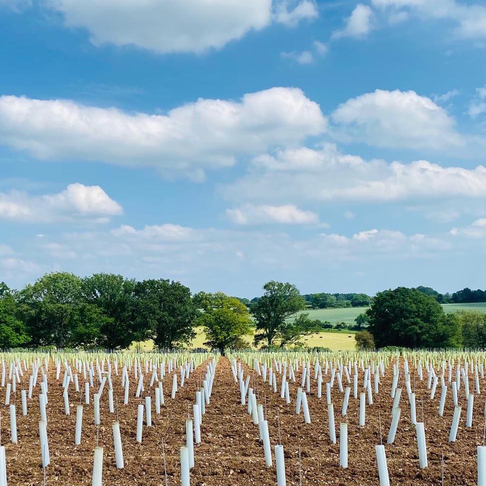 Coates & Seely new vineyard planting